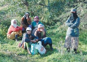 Les ouvrières agricoles regagnent la province de Huelva