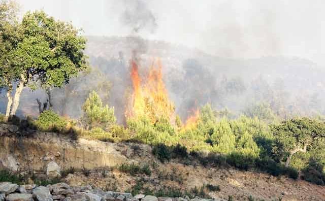 174 ha de surfaces forestières perdus à Tanger-Asilah : Nécessité de prévenir  les incendies de forêts