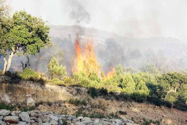 Agadir : Plus de 250 ha de forêt partis en fumée