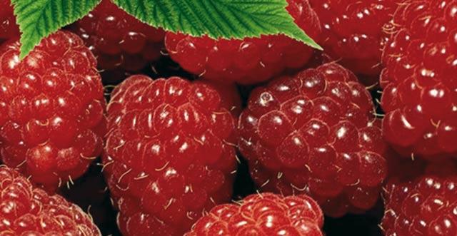 Tanger-Tétouan : 1.000 ha consacrés à la culture des petits fruits rouges