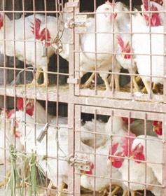 Télex : Gestion du risque aviaire