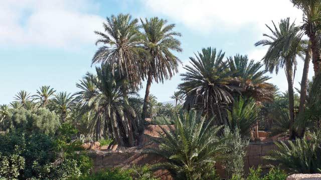 730 millions de dirhams investis dans l agriculture à Guelmim : 32.000 personnes ont profité  du Plan Maroc Vert