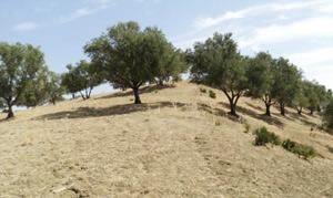 Al Hoceima : Garantir une bonne année agricole