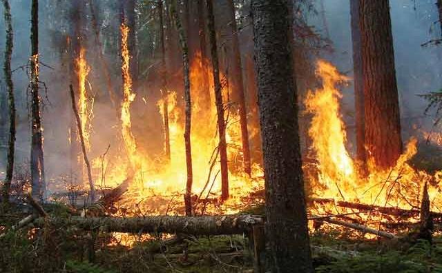 Khénifra: une quarantaine d'hectares endommagés par le feu de forêt à Ouiouane