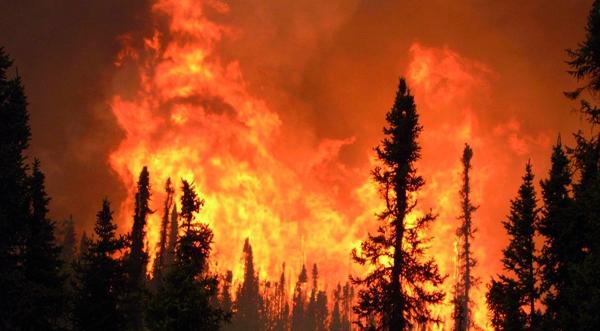 Incendies de forêts : Le Souss et le Rif en première ligne