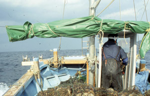 Pêche au poulpe : La résistance au changement s'organise