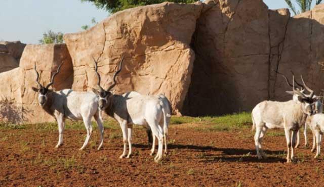 19 nouvelles naissances au Jardin zoologique national de Rabat