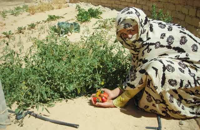 Laâyoune : Des mesures pour une bonne campagne agricole
