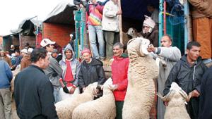 Les moutons seront probablement plus chers cette année