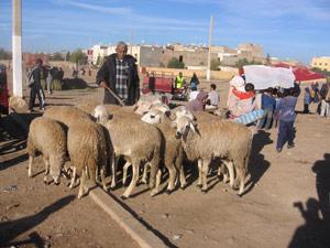 Tadla-Azilal : L'Aïd Al Adha entre tradition et modernité