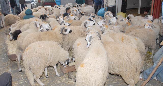 Incompréhensible et injustifiée surchauffe : Les «chenaka» derrière la hausse du prix du mouton