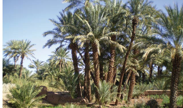 Errachidia, sous le signe du développement