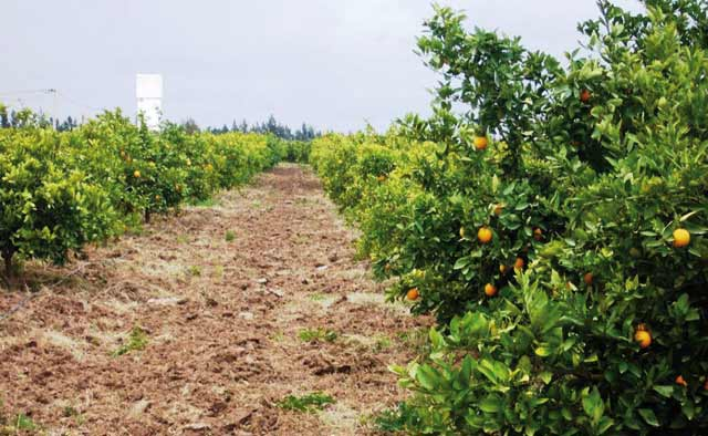 Croissance verte au Maroc