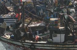 Le Japon s'intéresse au poisson marocain