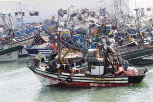 Agadir : Pour une approche écosystémique de la pêche