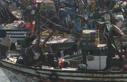 Un énième plan pour sauver la pêche