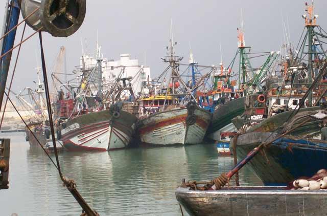 Tentatives de désinformation dans le secteur de la pêche maritime : Le ministère coupe court aux rumeurs