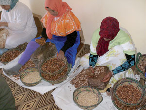 Maroc Vert : «Une agriculture pour tous»