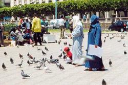Casablanca : Les pigeons sont libres