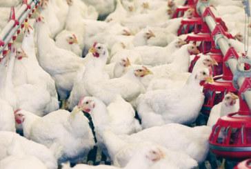 Tiznit : Les éleveurs de volaille sensibilisés aux perspectives du secteur