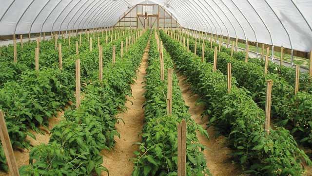 Projet de loi : La production biologique s offre un cadre législatif