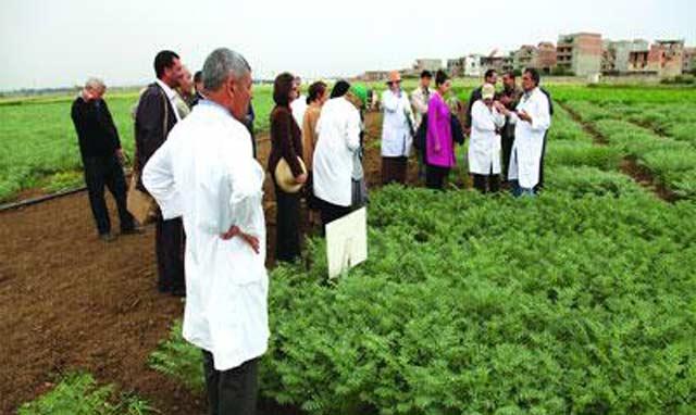Recherche agricole :  Des experts de 22 pays  se réunissent à Rabat