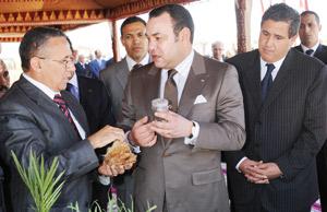 Développement du palmier dattier dans les oasis de Ouarzazate et Zagoura