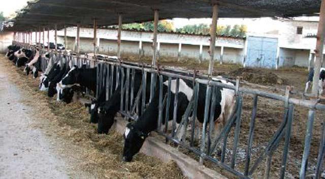 Tadla-Azilal prépare son salon de l élevage