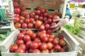 Les tomates marocaines soumises à de nouvelles exigences