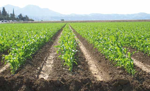Une pluviométrie en hausse de 49% : Un million d hectares emblavés  au 15 octobre