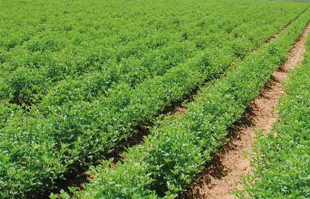 Une foire régionale des produits de terroir à Casablanca