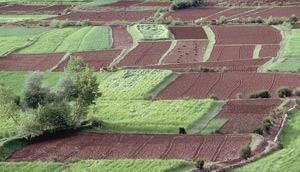 Khénifra : Plus de 188.000 ha programmés pour la culture céréalière