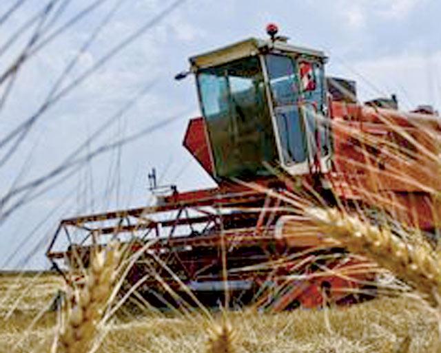 Production céréalière : Plus de 15 millions de qx attendus à Chaouia-Ouardigha
