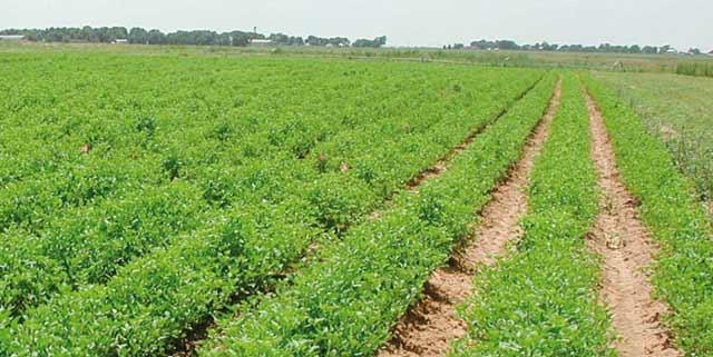 Agriculture : Le Maroc et le Portugal signent un mémorandum d entente