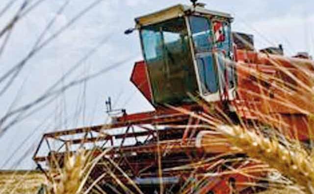Céréaliculture : Ce que proposent les Sciences Po pour améliorer les rendements