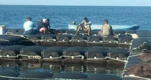 Pêche : cap sur l'aquaculture