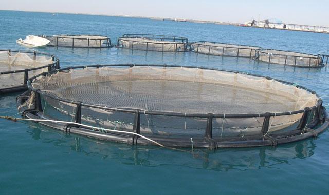 Al Hoceima inaugure le cycle des journées de l aquaculture
