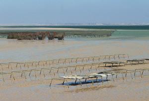 Dakhla : Préserver la baie de Oued Eddahab