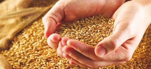 Campagne céréalière 2011-2012 : Diminution de 39,1% de la production des trois principales céréales