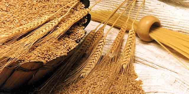 Réserves de blé : 24,3 millions de quintaux  dans les silos