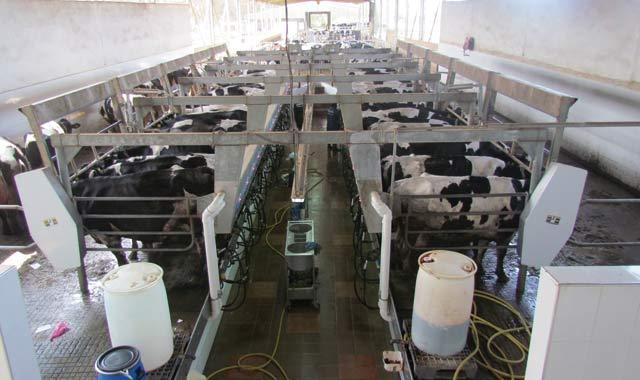 Carrefour de l élevage bovin : Une ferme à ciel ouvert à Taroudant