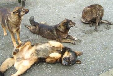 Casablanca s'active dans la lutte contre les nuisibles et les chiens errants