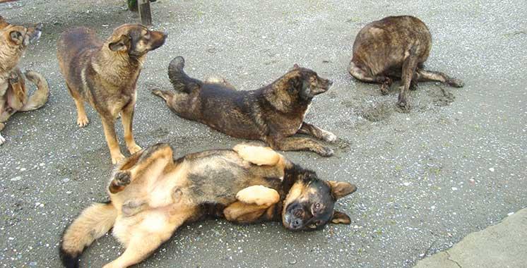 Vaste campagne sur les réseaux sociaux: Non à l'abattage des chiens errants !