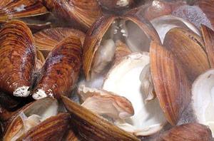 Boujdour : Interdiction de commercialisation des coquillages