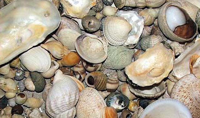 Boujdour : Interdiction de la récolte et de la commercialisation des coquillages de la zone Lakraâ