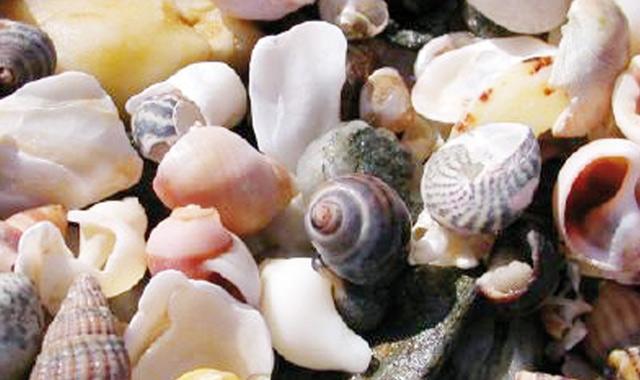 Les coquillages issus de la  région de Tétouan-Chefchaouen interdits de commercialisation