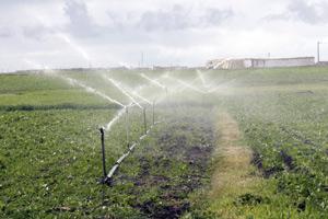 Beni Mellal : Contraintes et défis autour de l'irrigation des zones agricoles