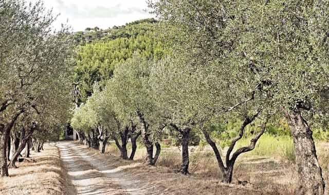 Agriculture dans la région de Fès-Boulemane : Les investissements fusent en 2014