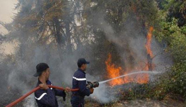 Incendie de forêt près d'Al Hoceima : 8 hectares de végétations ravagées !