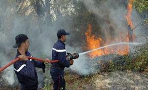 Tanger : l'incendie de la forêt de Sania totalement maîtrisé